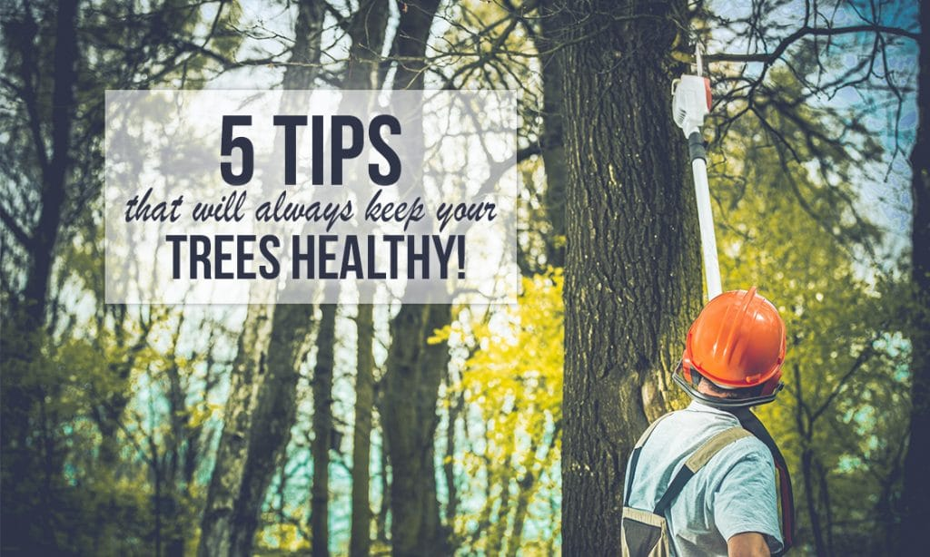 5 Tips That Will Always Keep Your Trees Healthy